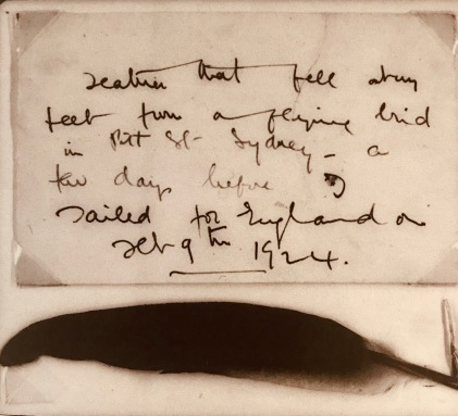 Picture of the feather