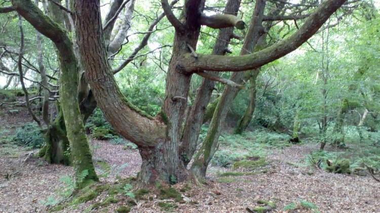 Tree near the Fairy House